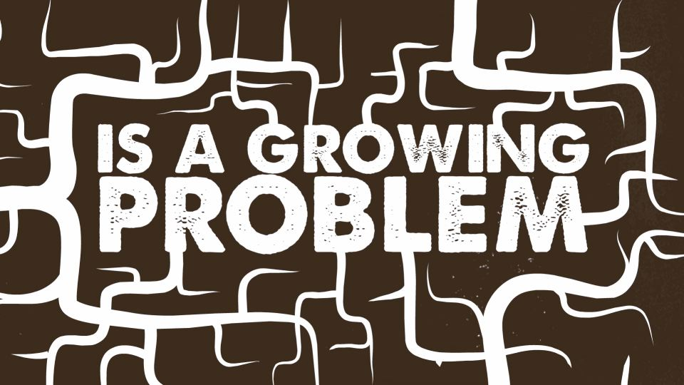 P1_2013_SeedsOfHope_GrowingProb